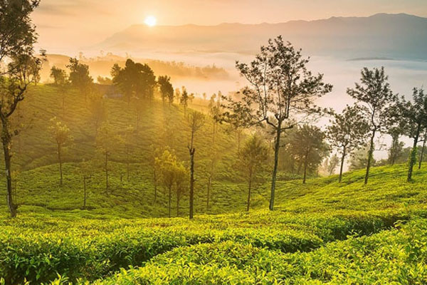 3Nights & 4Days Ooty from Coimbatore